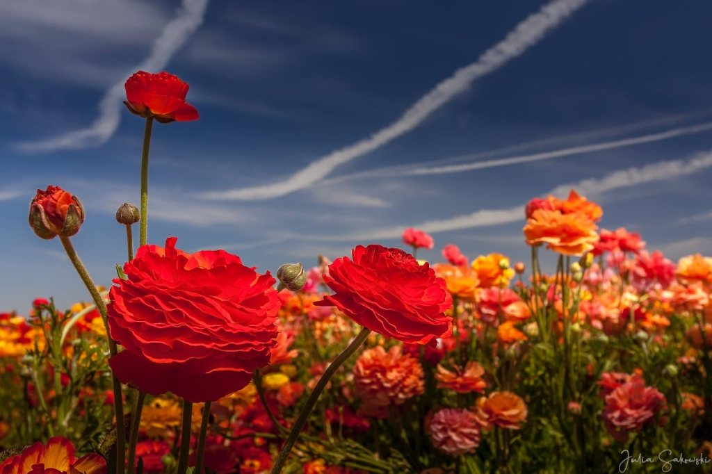 Red flowers and the blue sky